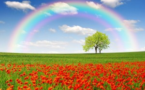 rainbow-on-a-poppy-field-1434-706